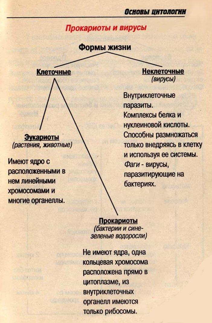 рыжих ботаника в таблицах схемах тестах и терминах Русский стандарт