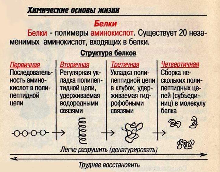 Зоология в таблицах и схемах фото 388